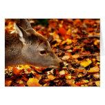 Cervatillo del bebé que huele las hojas de otoño e tarjetón