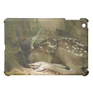 Cervatillo del ciervo común en el bosque, Alemania