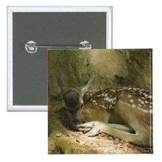 Cervatillo del ciervo común en el bosque, Alemania Pin Cuadrado