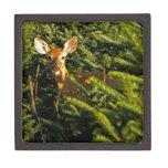 Cervatillo en caja de regalo de los árboles de pin cajas de joyas de calidad