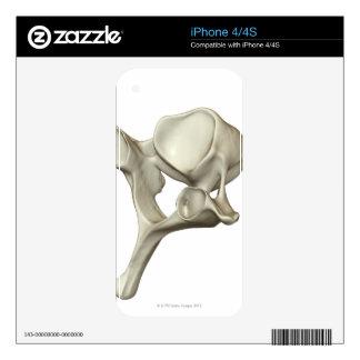 Cervical Vertebra iPhone 4S Skin