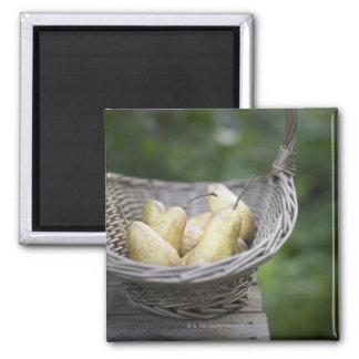 Cesta de peras recientemente escogidas imán cuadrado