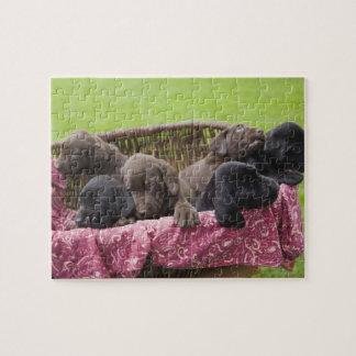 Cesta de perritos del labrador retriever puzzle con fotos