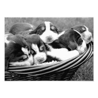 Cesta de perritos cojinete
