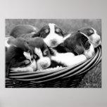 Cesta de perritos poster