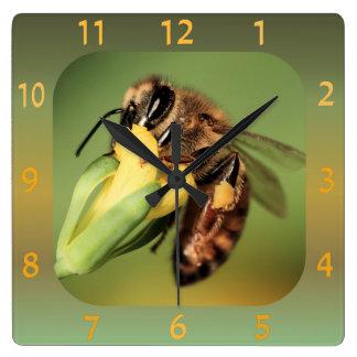 Cesta del polen de la abeja del primer de la reloj cuadrado