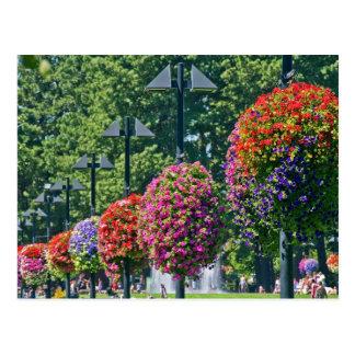 Cestas colgantes de la flor tarjetas postales
