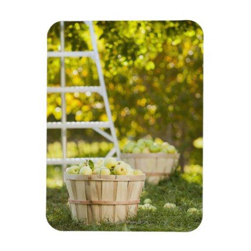 Cestas de manzanas en huerta imanes de vinilo