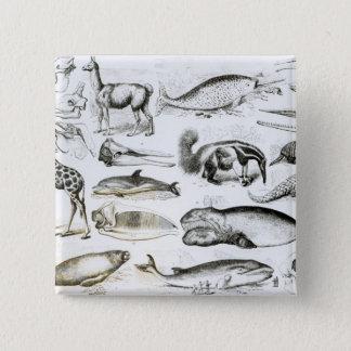Cetacea Edentata Pinback Button
