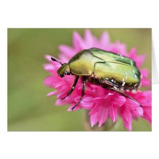 Cetonia beetle on pink flower card