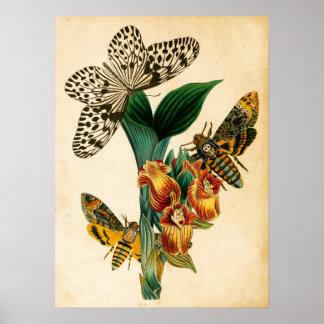 Ceylon Tree Nymph Butterfly & Acherontia Moths Poster