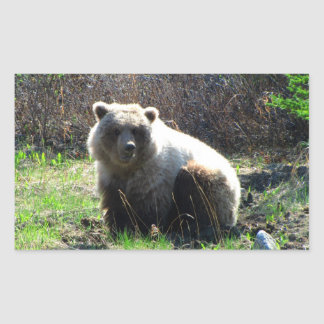CGB Chubby Grizzly Bear Sticker