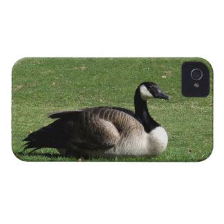 CGR Canada Goose Resting Case-Mate iPhone 4 Case