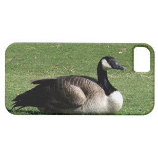 CGR Canada Goose Resting iPhone SE/5/5s Case