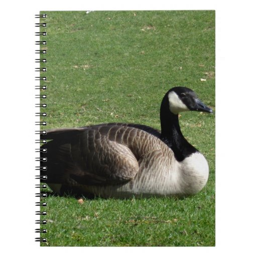 CGR Canada Goose Resting Notebooks