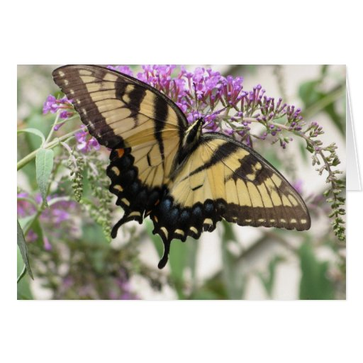 CH- Yellow and Black Butterfly Stationery Note Card