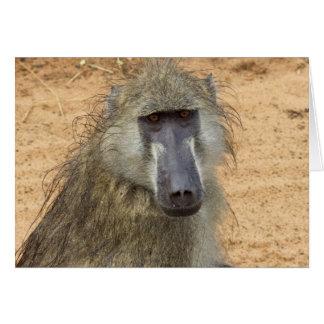 Chacma Baboon, Botswana, Africa, Greeting Card