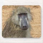 Chacma Baboon, Botswana, Africa, Mousepad