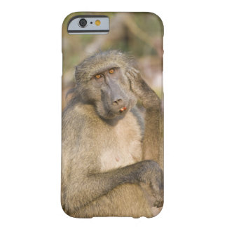 Chacma Baboon (Papio ursinus) scratching its Barely There iPhone 6 Case