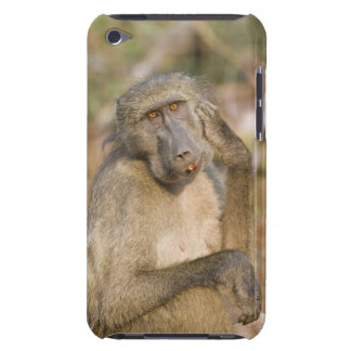 Chacma Baboon (Papio ursinus) scratching its Barely There iPod Case