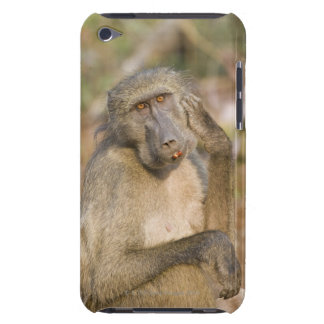 Chacma Baboon (Papio ursinus) scratching its Barely There iPod Cover