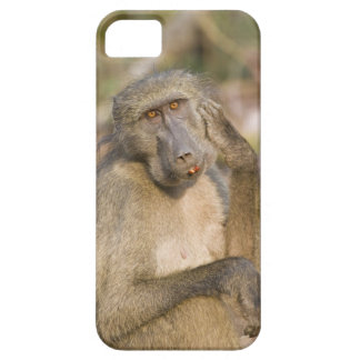 Chacma Baboon (Papio ursinus) scratching its iPhone SE/5/5s Case