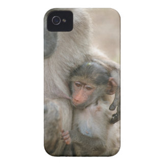 Chacma Baboon, Papio ursinus with young, Kruger iPhone 4 Case-Mate Case