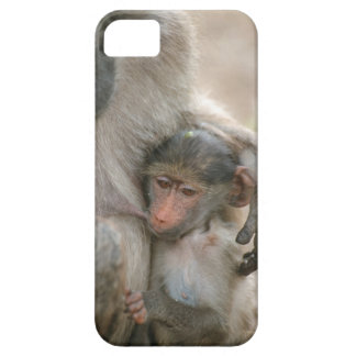 Chacma Baboon, Papio ursinus with young, Kruger iPhone 5 Covers