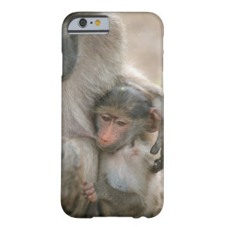 Chacma Baboon, Papio ursinus with young, Kruger Barely There iPhone 6 Case