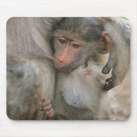 Chacma Baboon, Papio ursinus with young, Kruger Mouse Pad