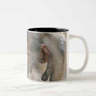 Chacma Baboon, Papio ursinus with young, Kruger Two-Tone Coffee Mug