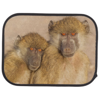 Chacma Baboon, two subadults in the early morning Car Mat