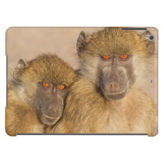 Chacma Baboon, two subadults in the early morning iPad Air Covers