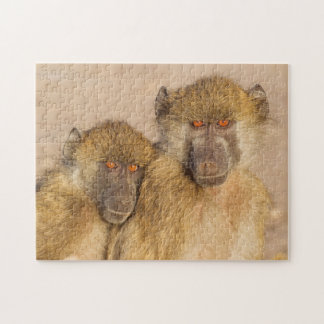 Chacma Baboon, two subadults in the early morning Jigsaw Puzzle