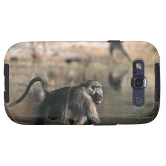 Chacma Baboons (Papio ursinus) walking through Samsung Galaxy S3 Covers