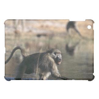 Chacma Baboons (Papio ursinus) walking through iPad Mini Cover