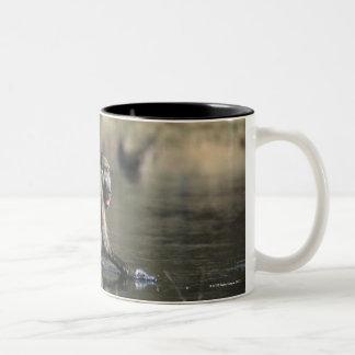 Chacma Baboons (Papio ursinus) walking through Two-Tone Coffee Mug