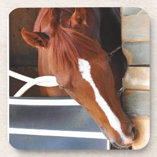 Chad Brown Stables Coaster