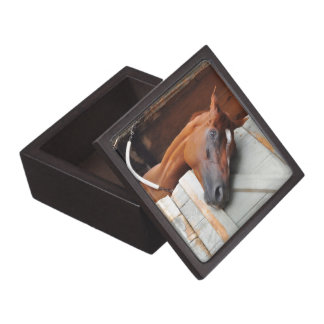 Chad Brown Stables Gift Box