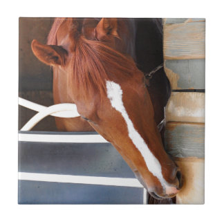 Chad Brown Stables Tile
