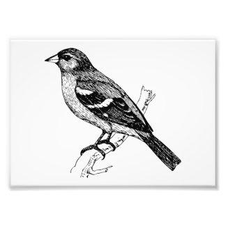 Chaffinch Bird Art Photo