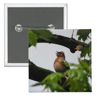 Chaffinch común pins