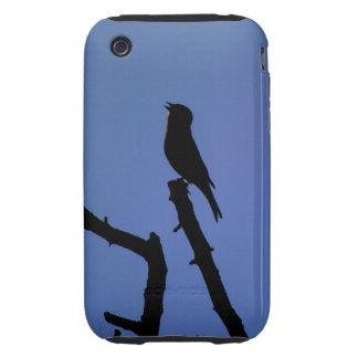 Chaffinch Singing 3G/3GS Case Mate Tough iPhone 3 Tough Cases