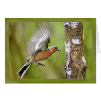 Chafrfinch Note Card