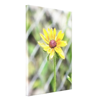 Chain Link Fence and Black Eyed Susan Canvas Prints