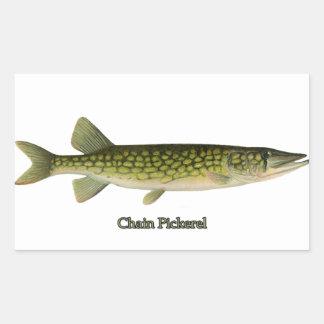 Chain Pickerel Illustration Rectangular Sticker