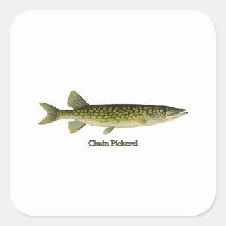 Chain Pickerel Illustration Square Sticker