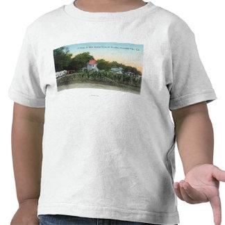 Chalet SceneEl Verano, CA de la arboleda del roble Camisetas