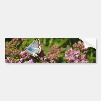 Chalkhill Blue butterfly Bumper Sticker