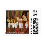 Chamaedaphne calyculata, leatherleaf stamp